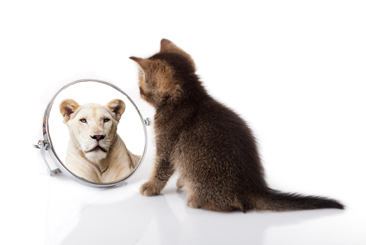 cat psychiatrist