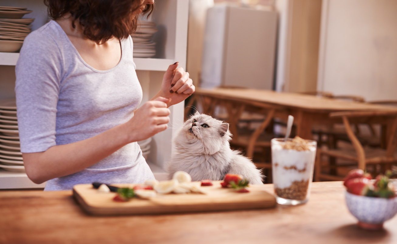 How is your cats diet?