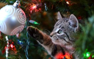Are christmas trees poisonous to cats