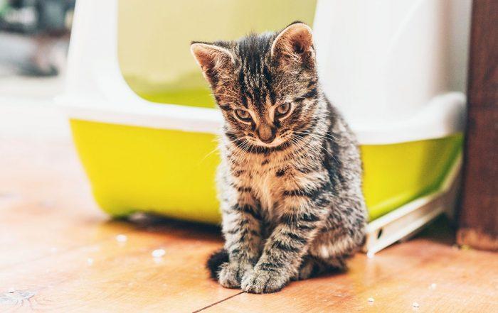 Little Kitten looking playful