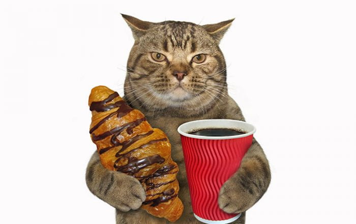 Cat with a chocolate bun and coffee