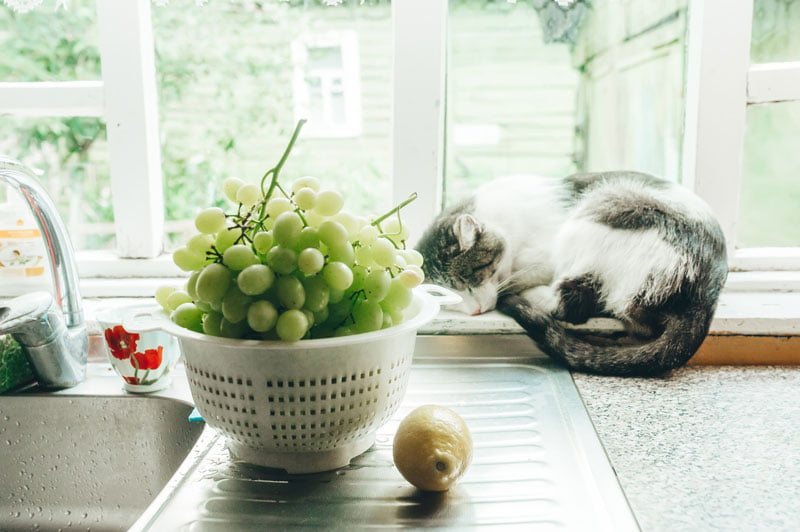 cat sleeping on window sill by sink and fresh fruit
