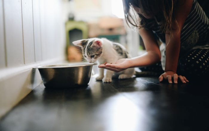 kitten who is eating from a large silver pet bowl