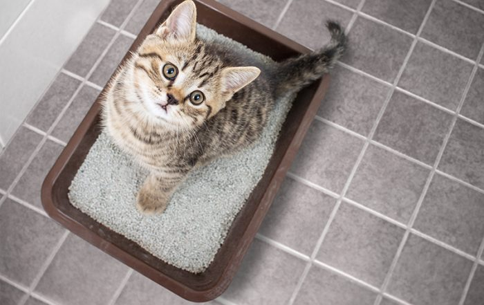 Cat top view sitting in litter box with sand on bathroom floor
