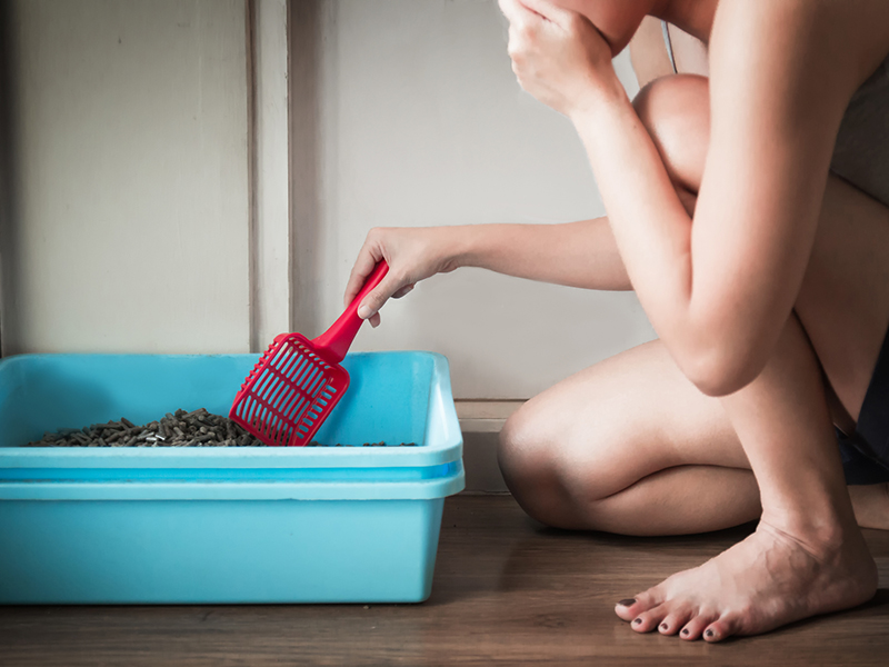cleaning the blue little box or cat toilet, feeling stinky