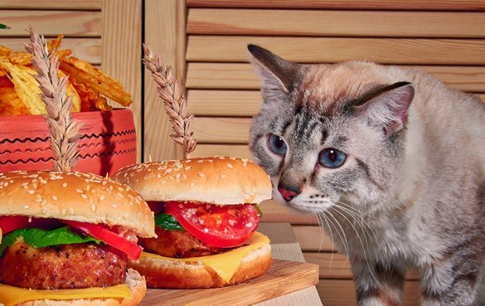 cat with fast food burgers