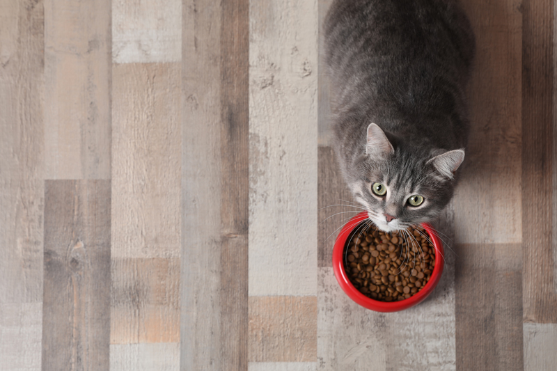 Adorable cat near bowl of food indoors