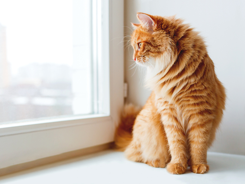 Cute ginger cat siting on window sill and waiting for something.