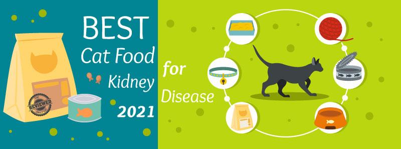 best cat food for kidney disease