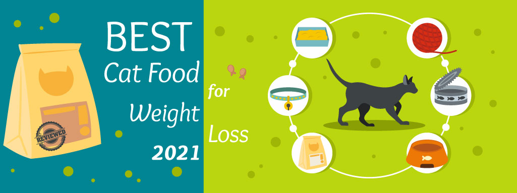 The Daily Cat - Best Cat Food for Weight Loss Graphic