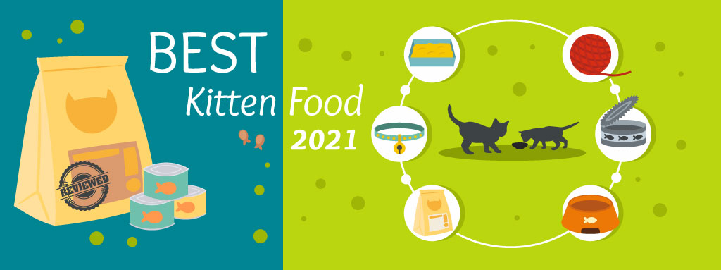 The Daily Cat - Best Kitten Food Graphic